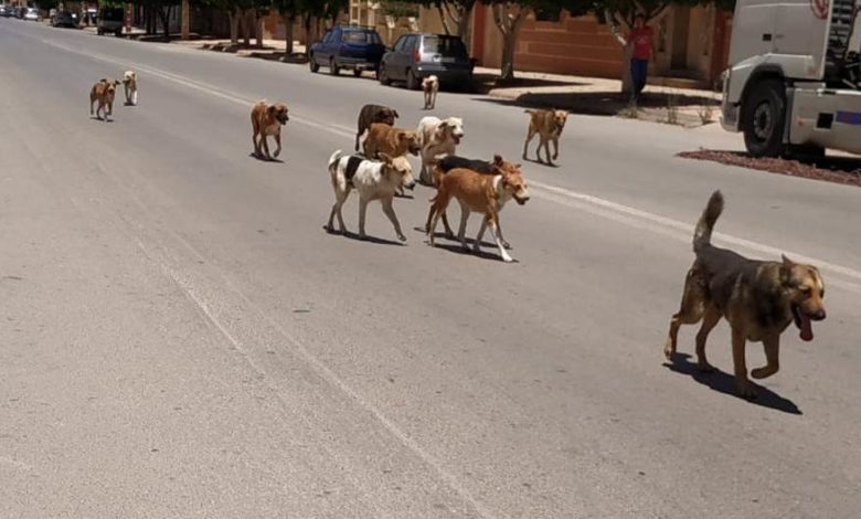 Photo of كلاب ضالة تهاجم أطفال حي التقدم بوجدة  وتعض طفلا على مستوى البطن