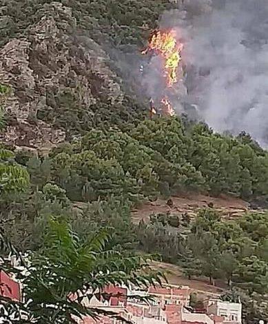Photo of السيطرة على إخماد لهيب الحريق بغابة بوطاعة بازرو